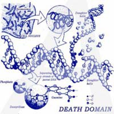DEATH DOMAIN Ethidium Bromide